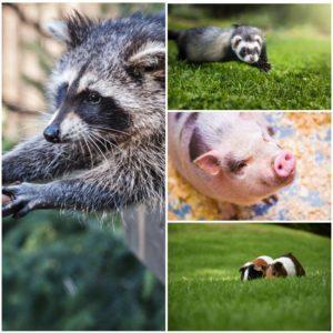 gps маячок для животных, трекер для животных, gps для животных