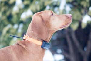 Навигатор для охоты с собакой