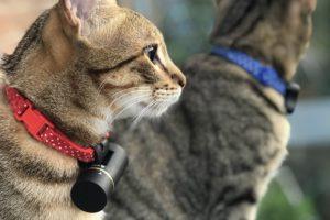 GPS маячок для кошки Pod 3 GPS Tracker