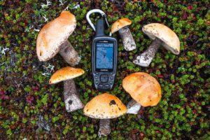 Возвращатель для грибника, GPS навигатор Garmin GPSMAP