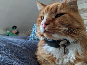 GPS маячок для кота