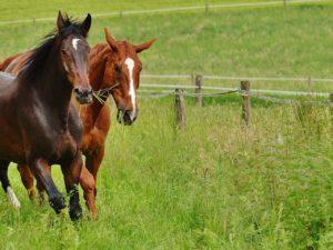 gps трекер для лошадей